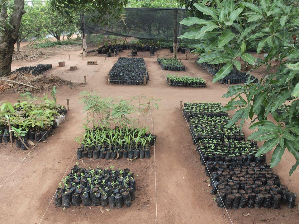 Bénin ADeD pépinière
