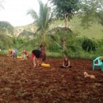 preparation terre