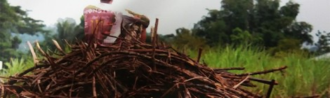 Histoires de lutte. La réforme foncière à Negros, aux Philippines