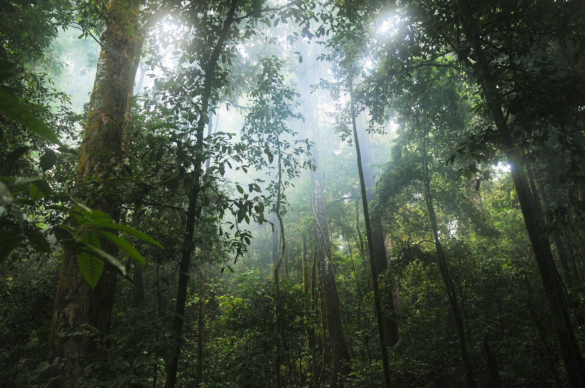 jungle-601542_1920